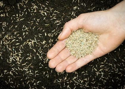 Sjeme i gnojiva za travu